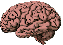 brain-512758_960_720