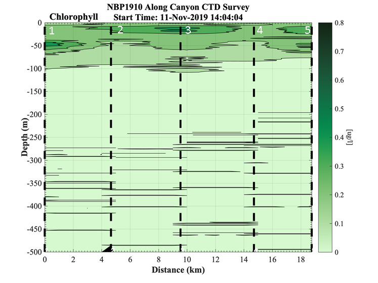 Profiles of chlorophyll from a Palmer Canyon CTD survey