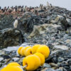 Adelie penguin colony, Antarctica
