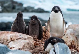 Bird and Chicks, Antarctica