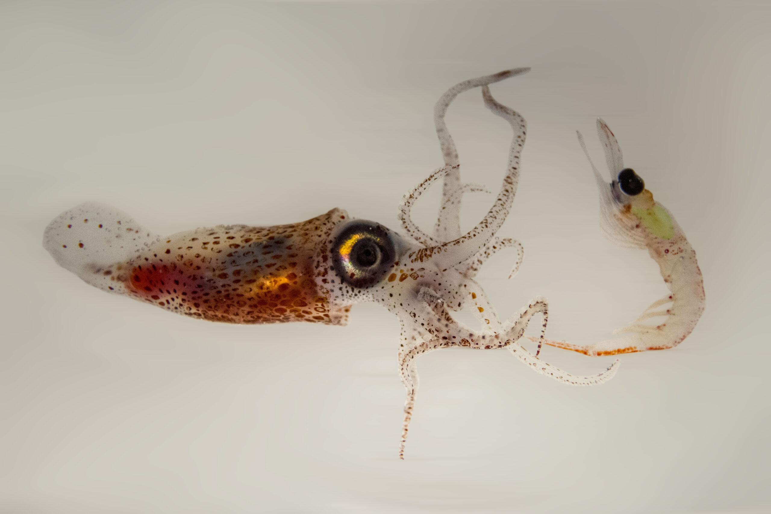 Zooplankton predator-prey, Antarctica